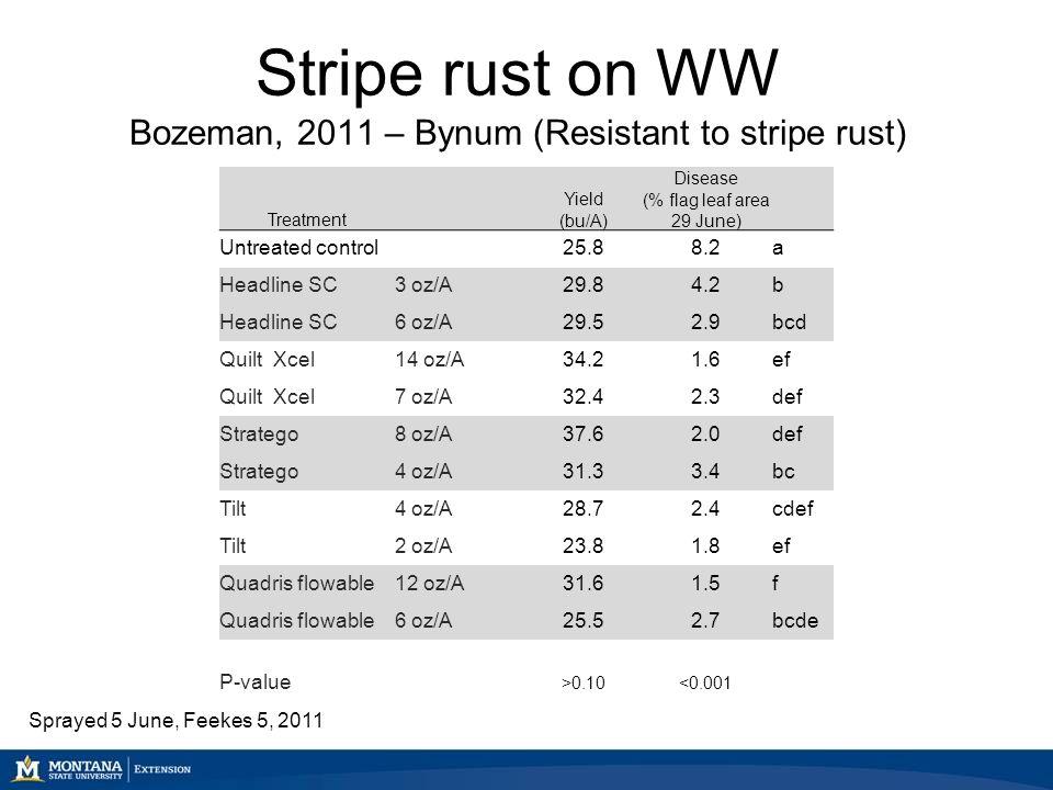 Stripe rust on WW Bozeman, 2011 – Bynum (Resistant to stripe rust) Treatment Yield (bu/A) Disease (% flag leaf area 29 June) Untreated control25.88.2a