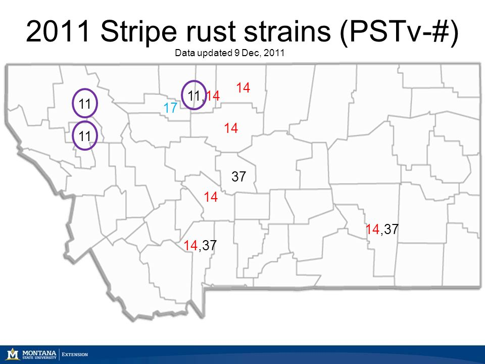 2011 Stripe rust strains (PSTv-#) Data updated 9 Dec, 2011 11 11,14 14 14,37 37 17