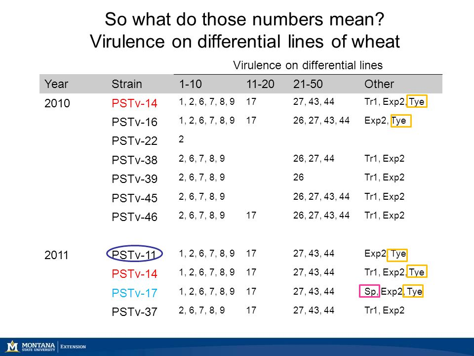 So what do those numbers mean? Virulence on differential lines of wheat Virulence on differential lines YearStrain1-1011-2021-50Other 2010PSTv-14 1, 2