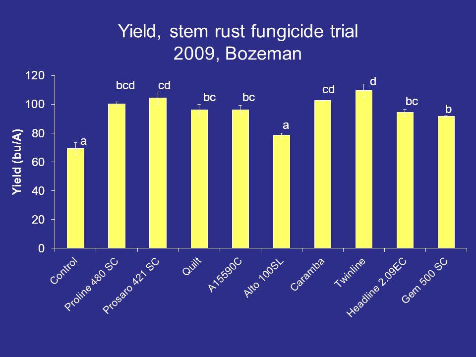 Yield, stem rust fungicide trial 2009, Bozeman a bcd cd bc a cd d bc b