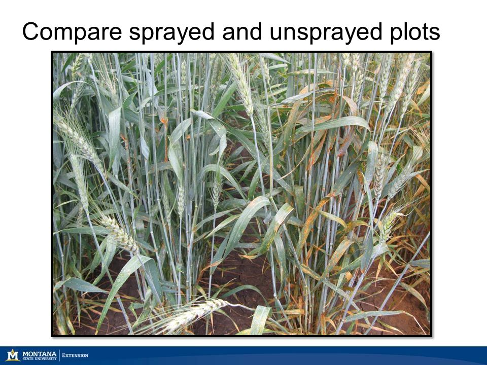Compare sprayed and unsprayed plots