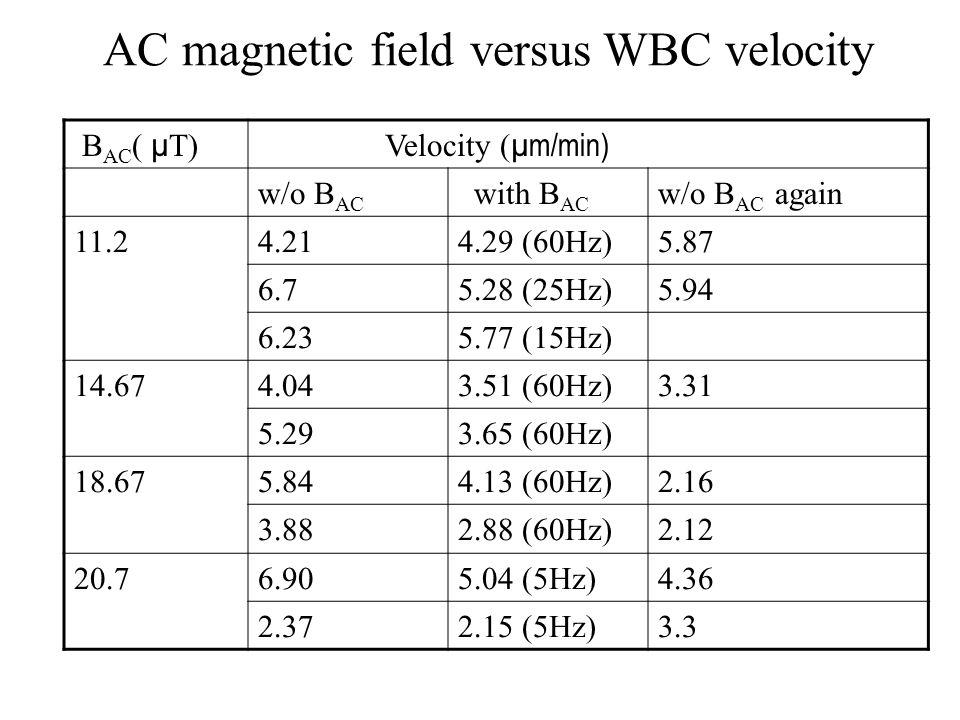 B AC ( µ T) Velocity ( µm/min) w/o B AC with B AC w/o B AC again 11.24.214.29 (60Hz)5.87 6.75.28 (25Hz)5.94 6.23 5.77 (15Hz) 14.67 4.04 3.51 (60Hz)3.31 5.29 3.65 (60Hz) 18.675.844.13 (60Hz)2.16 3.882.88 (60Hz)2.12 20.76.905.04 (5Hz)4.36 2.372.15 (5Hz)3.3 AC magnetic field versus WBC velocity