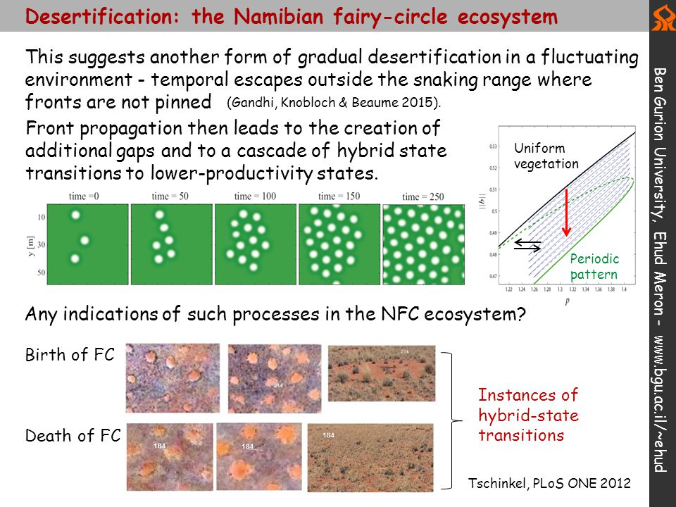 Desertification: the Namibian fairy-circle ecosystem Ben Gurion University, Ehud Meron - www.bgu.ac.il/~ehud Any indications of such processes in the