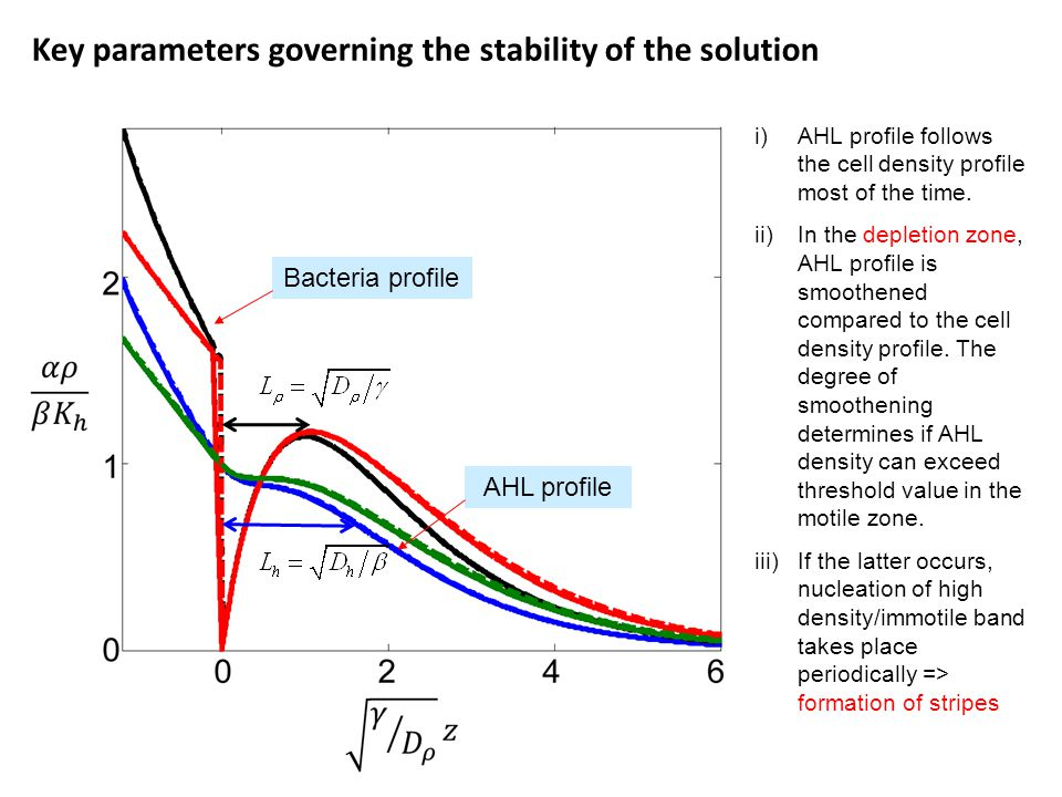 Key parameters governing the stability of the solution Bacteria profile AHL profile i)AHL profile follows the cell density profile most of the time.