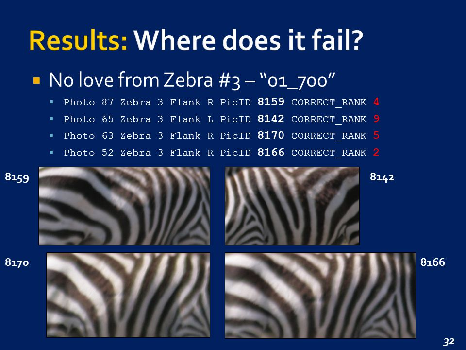 32  No love from Zebra #3 – 01_700  Photo 87 Zebra 3 Flank R PicID 8159 CORRECT_RANK 4  Photo 65 Zebra 3 Flank L PicID 8142 CORRECT_RANK 9  Photo 63 Zebra 3 Flank R PicID 8170 CORRECT_RANK 5  Photo 52 Zebra 3 Flank R PicID 8166 CORRECT_RANK 2 81598142 81708166