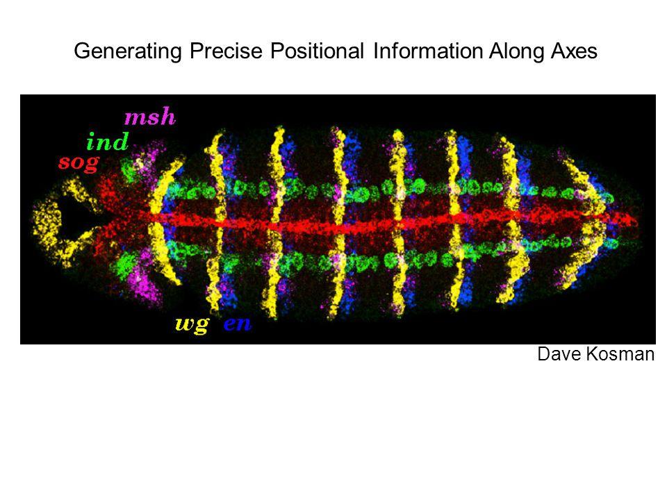 Dave Kosman Generating Precise Positional Information Along Axes