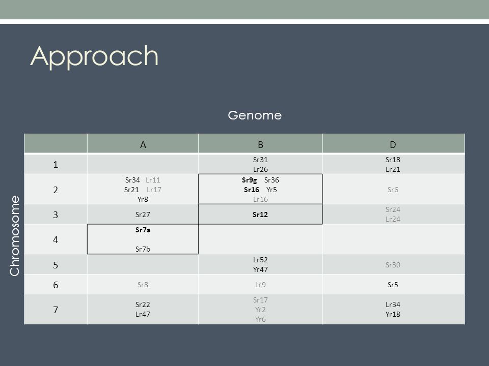 Approach ABD 1 Sr31 Lr26 Sr18 Lr21 2 Sr34 Lr11 Sr21 Lr17 Yr8 Sr9g Sr36 Sr16 Yr5 Lr16 Sr6 3 Sr27Sr12 Sr24 Lr24 4 Sr7a Sr7b 5 Lr52 Yr47 Sr30 6 Sr8Lr9Sr5 7 Sr22 Lr47 Sr17 Yr2 Yr6 Lr34 Yr18 Genome Chromosome