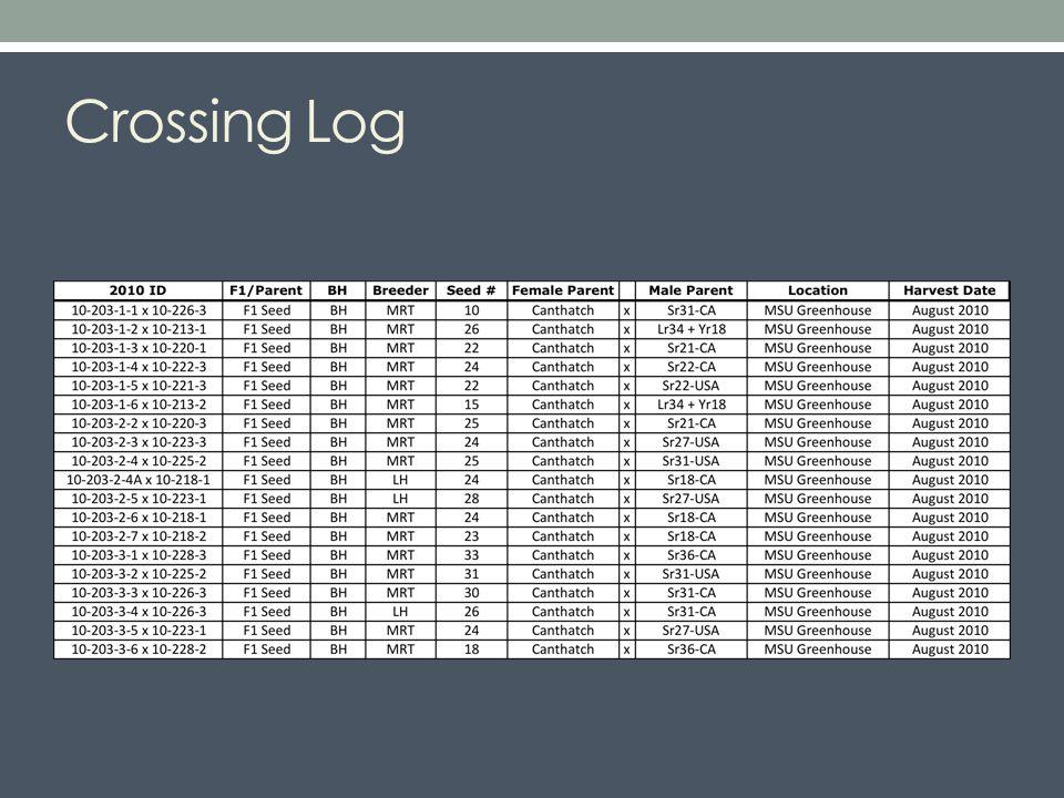 Crossing Log