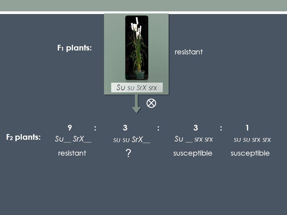 Su __ SrX __ su su SrX __ Su __ srx srx su su srx srx F 2 plants: 3913::: resistantsusceptible .