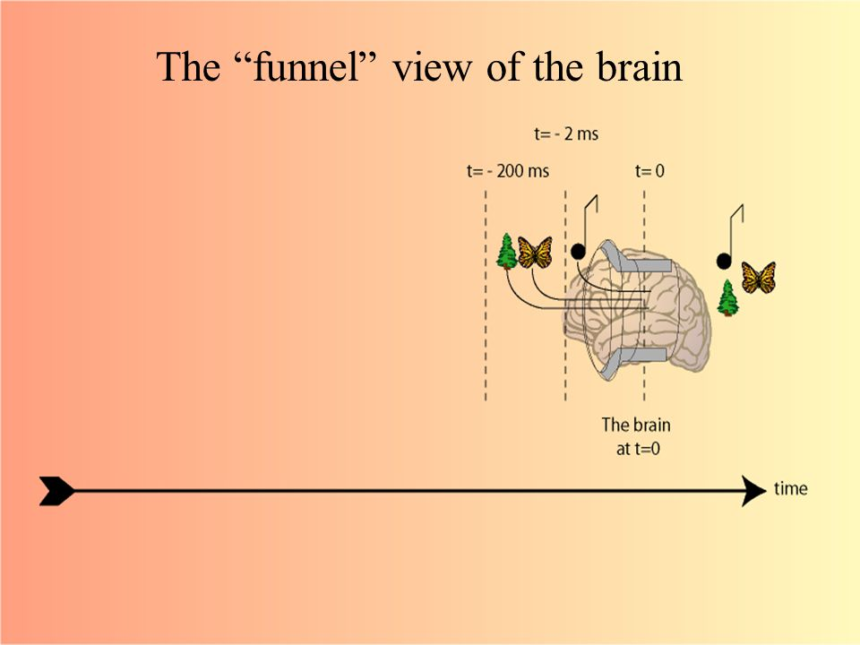 The funnel view of the brain