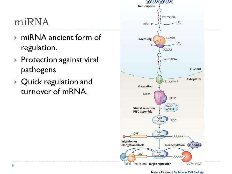 miRNA  miRNA ancient form of regulation.