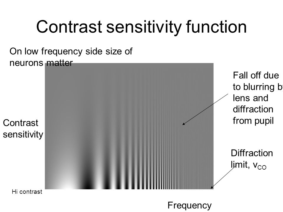 Contrast sensitivity function Contrast sensitivity Frequency Fall off due to blurring by lens and diffraction from pupil Diffraction limit, v CO Hi co