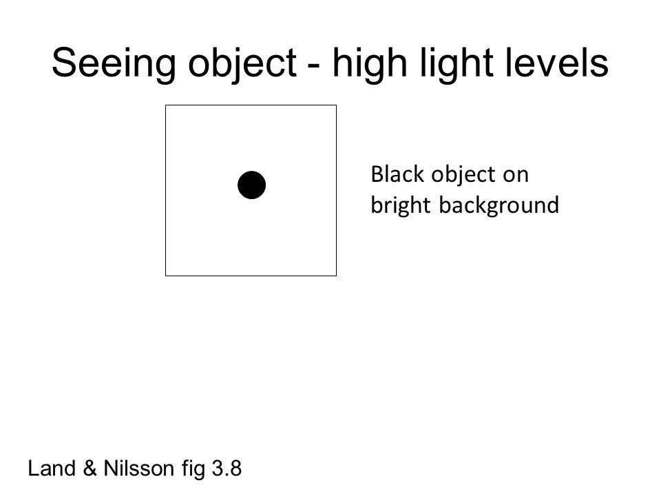 Seeing object - high light levels Land & Nilsson fig 3.8 Black object on bright background