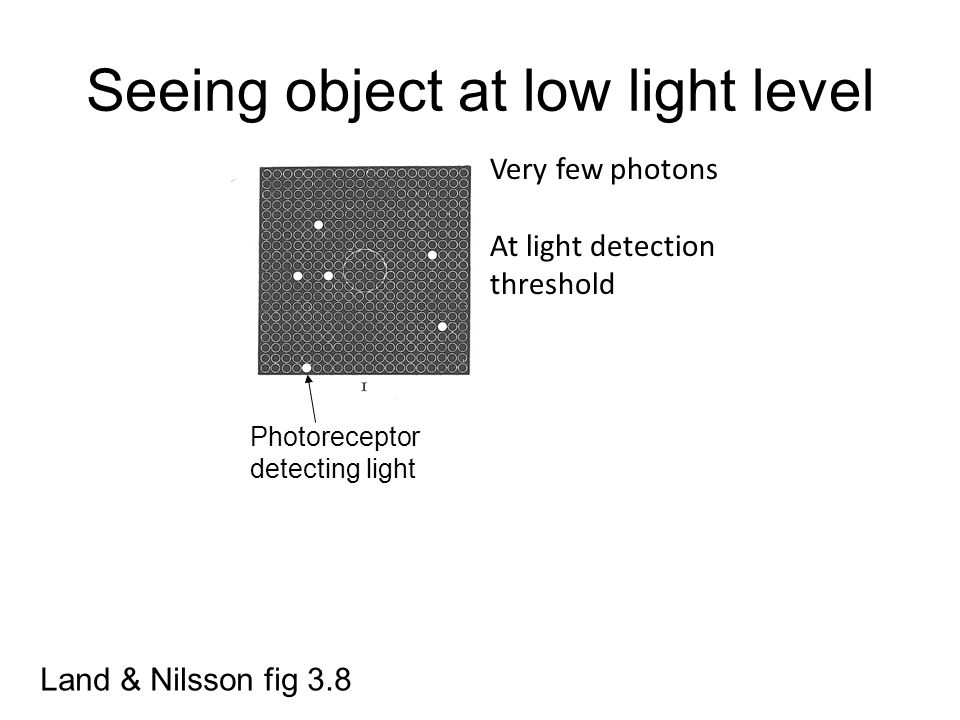 Seeing object at low light level Land & Nilsson fig 3.8 Very few photons At light detection threshold Photoreceptor detecting light