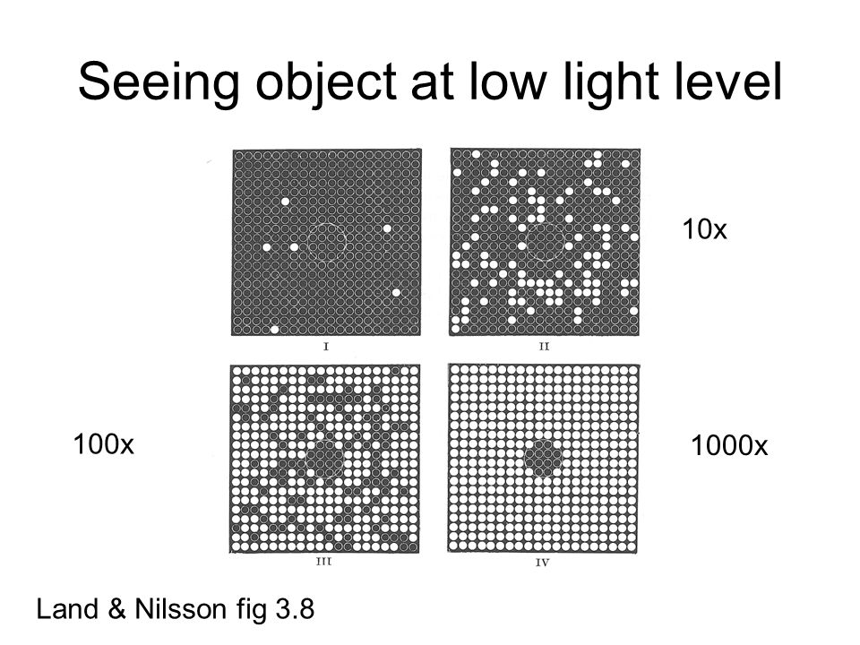 Seeing object at low light level Land & Nilsson fig 3.8 10x 100x 1000x