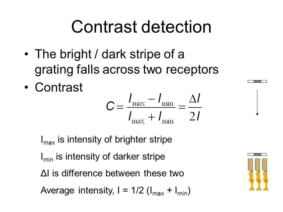 Contrast detection The bright / dark stripe of a grating falls across two receptors Contrast I max is intensity of brighter stripe I min is intensity