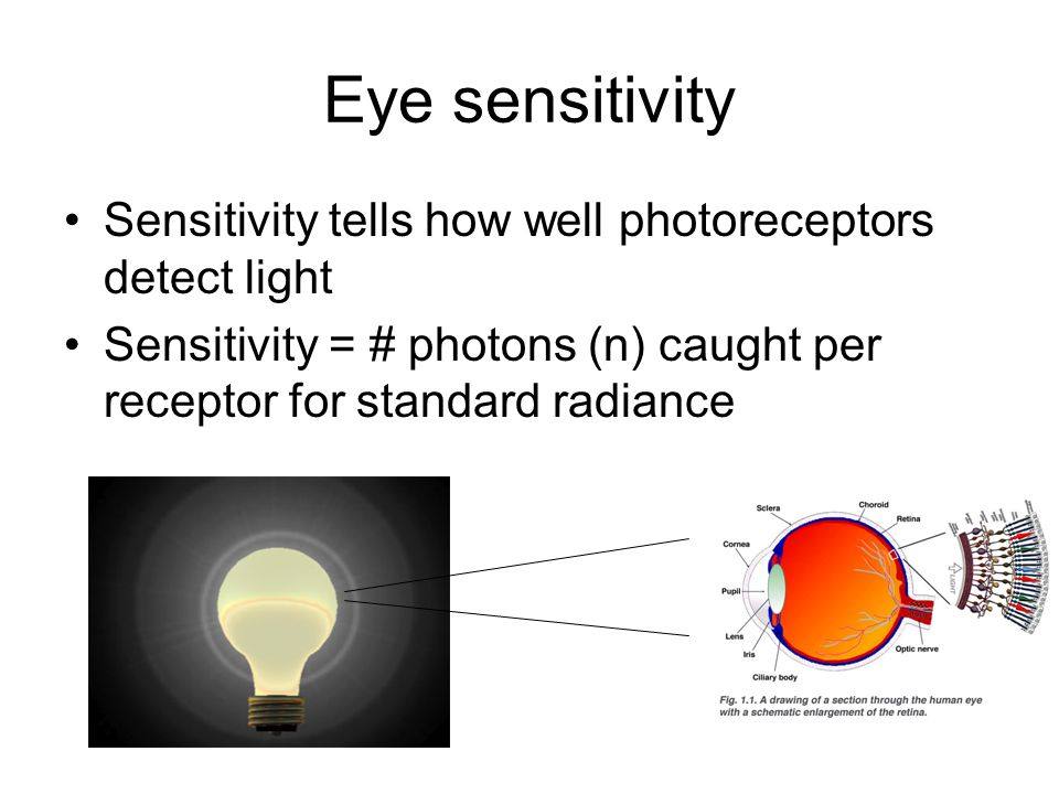 Eye sensitivity Sensitivity tells how well photoreceptors detect light Sensitivity = # photons (n) caught per receptor for standard radiance