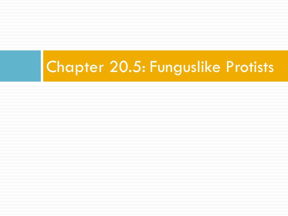 Chapter 20.5: Funguslike Protists