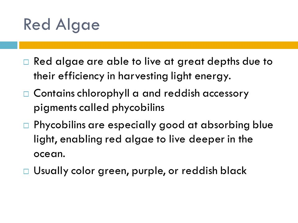 Red Algae  Red algae are able to live at great depths due to their efficiency in harvesting light energy.  Contains chlorophyll a and reddish access