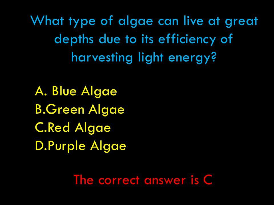 What type of algae can live at great depths due to its efficiency of harvesting light energy? A. Blue Algae B.Green Algae C.Red Algae D.Purple Algae T