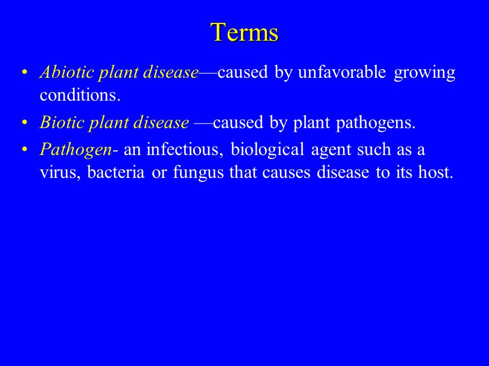 Important Plant Diseases-Turf Pythium Blight Symptoms –Large areas can die in 24-48 hours when conditions favoring pythium blight occur –Round to irregular, dark and water-soaked, greasy or slimy –Sunken patches 6-12 inches wide –Reddish brown areas fade to tan and die Causes –Several species of Pythium fungi