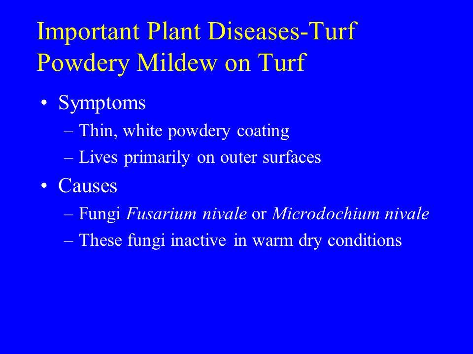 Important Plant Diseases-Turf Powdery Mildew on Turf Symptoms –Thin, white powdery coating –Lives primarily on outer surfaces Causes –Fungi Fusarium n