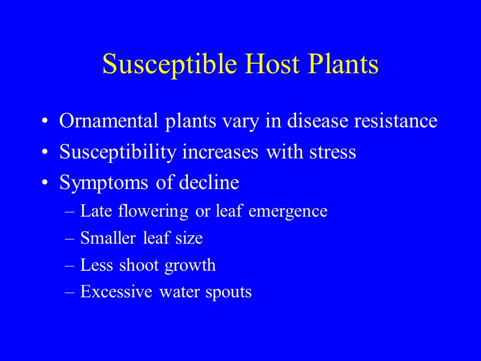 Important Plant Diseases-Turf Necrotic Ring Spot Favorable conditions –Cool or mild periods followed by dry, hot conditions –Widespread disease of Kentucky and annual bluegrass that is intensively managed---follows stress Control –Good cultural practices: aeration, drainage, balance of fertilizers, water in the morning –Resistant cultivars –Systemic fungicides