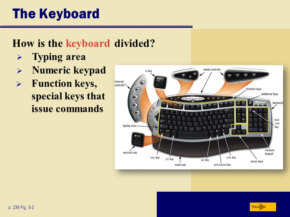 The Keyboard How is the keyboard divided? p. 236 Fig. 5-2 Next  Typing area  Numeric keypad  Function keys, special keys that issue commands