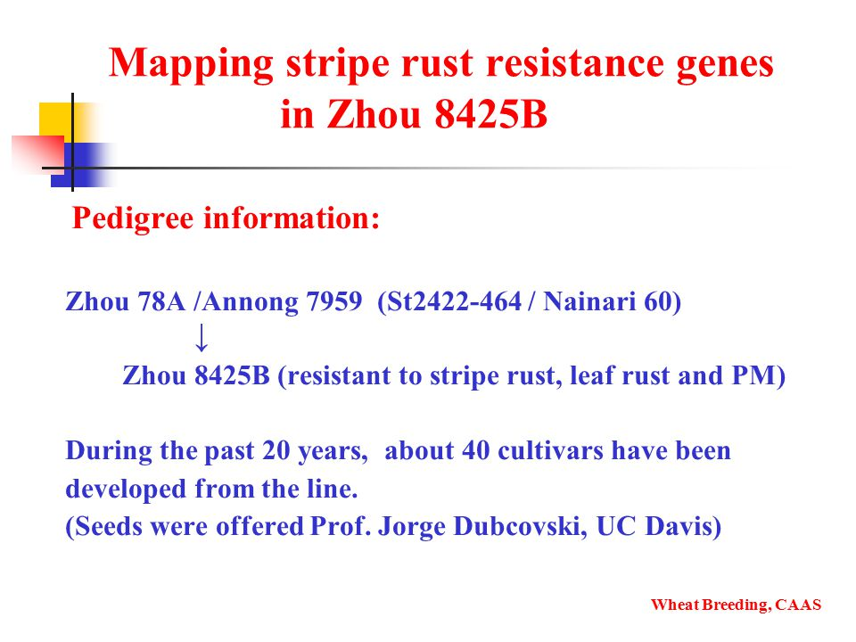 Mapping stripe rust resistance genes in Zhou 8425B Pedigree information: Zhou 78A /Annong 7959 (St2422-464 / Nainari 60) ↓ Zhou 8425B (resistant to stripe rust, leaf rust and PM) During the past 20 years, about 40 cultivars have been developed from the line.