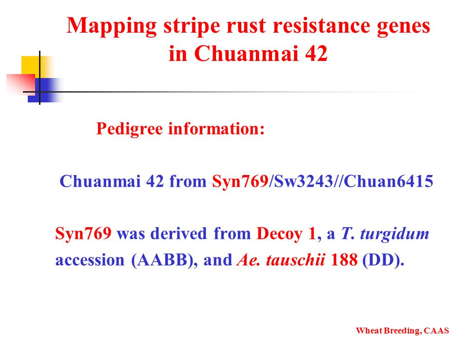 Mapping stripe rust resistance genes in Chuanmai 42 Pedigree information: Chuanmai 42 from Syn769/Sw3243//Chuan6415 Syn769 was derived from Decoy 1, a T.