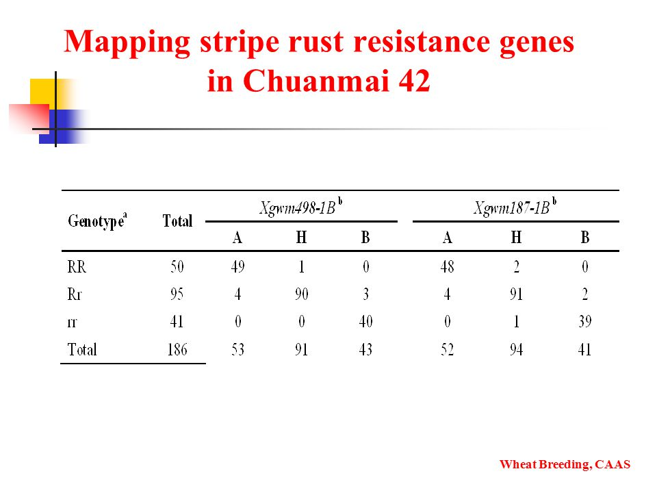 Mapping stripe rust resistance genes in Chuanmai 42 Wheat Breeding, CAAS