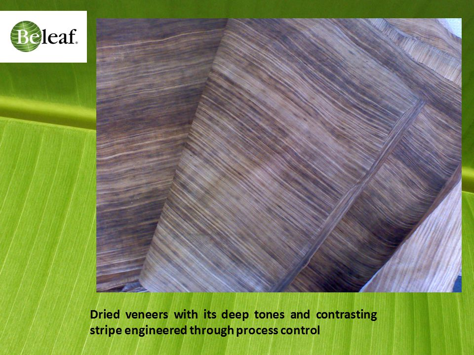 Dried veneers with its deep tones and contrasting stripe engineered through process control