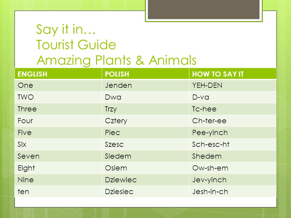 Say it in… Tourist Guide Amazing Plants & Animals ENGLISHPOLISHHOW TO SAY IT OneJendenYEH-DEN TWODwaD-va ThreeTrzyTc-hee FourCzteryCh-ter-ee FivePiecPee-yinch SixSzescSch-esc-ht SevenSiedemShedem EightOsiemOw-sh-em NineDziewiecJev-yinch tenDziesiecJesh-in-ch