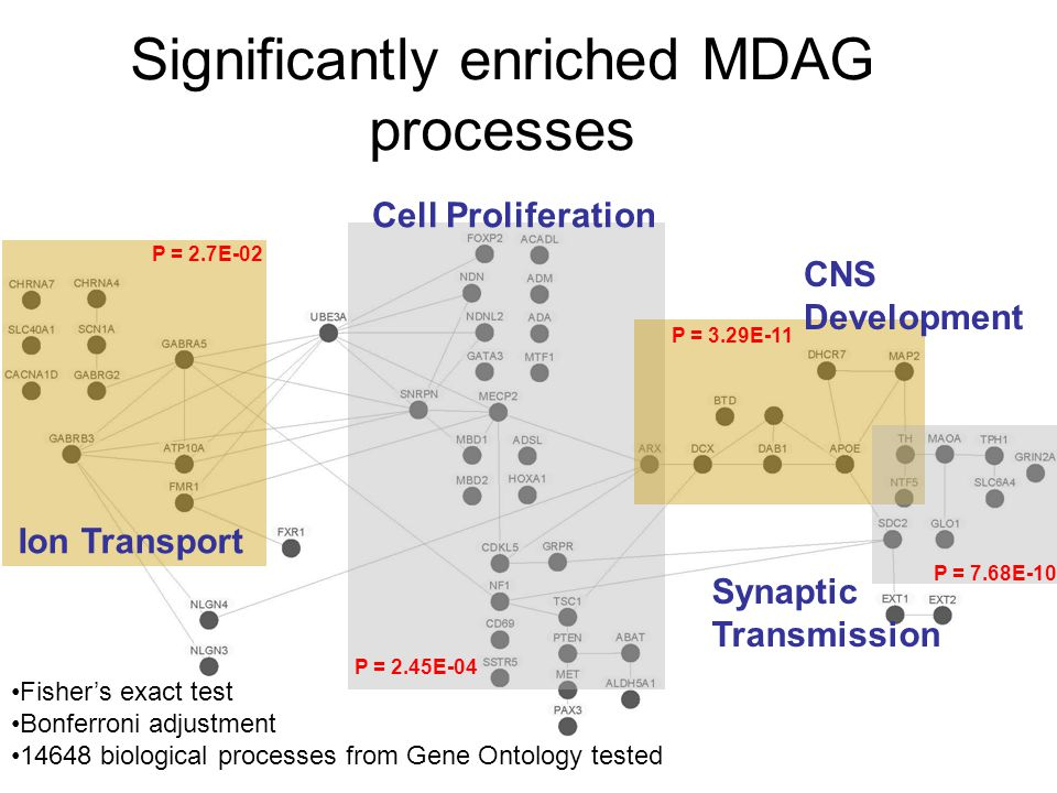 Significantly enriched MDAG processes Ion Transport Cell Proliferation CNS Development Synaptic Transmission P = 2.7E-02 P = 2.45E-04 P = 3.29E-11 P = 7.68E-10 Fisher's exact test Bonferroni adjustment 14648 biological processes from Gene Ontology tested