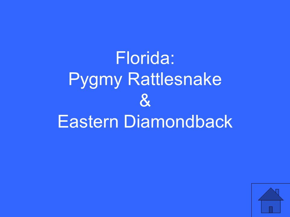 Florida: Pygmy Rattlesnake & Eastern Diamondback