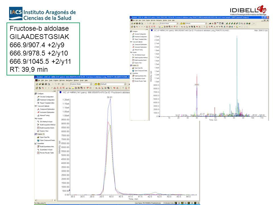 Fructose-b aldolase GILAADESTGSIAK 666.9/907.4 +2/y9 666.9/978.5 +2/y10 666.9/1045.5 +2/y11 RT: 39,9 min