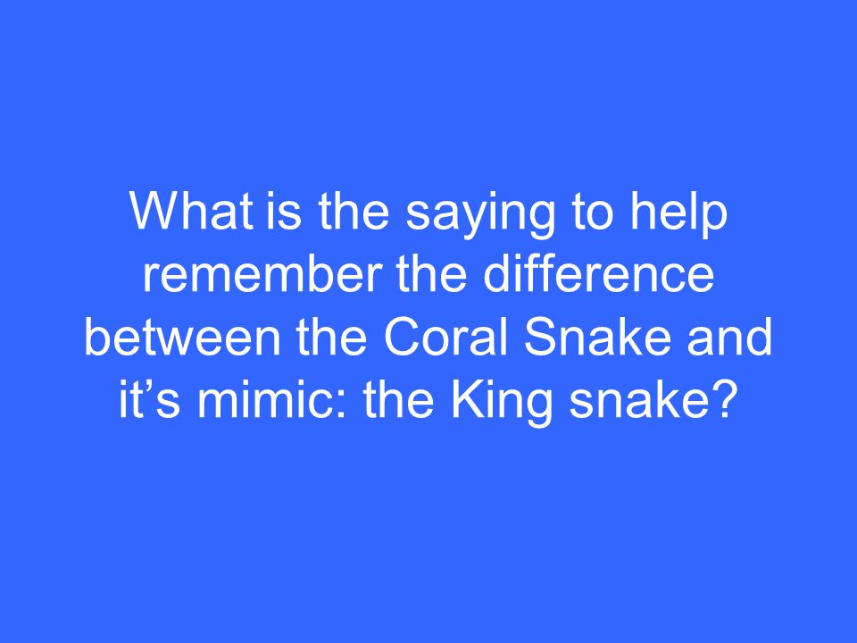 What is the saying to help remember the difference between the Coral Snake and it's mimic: the King snake