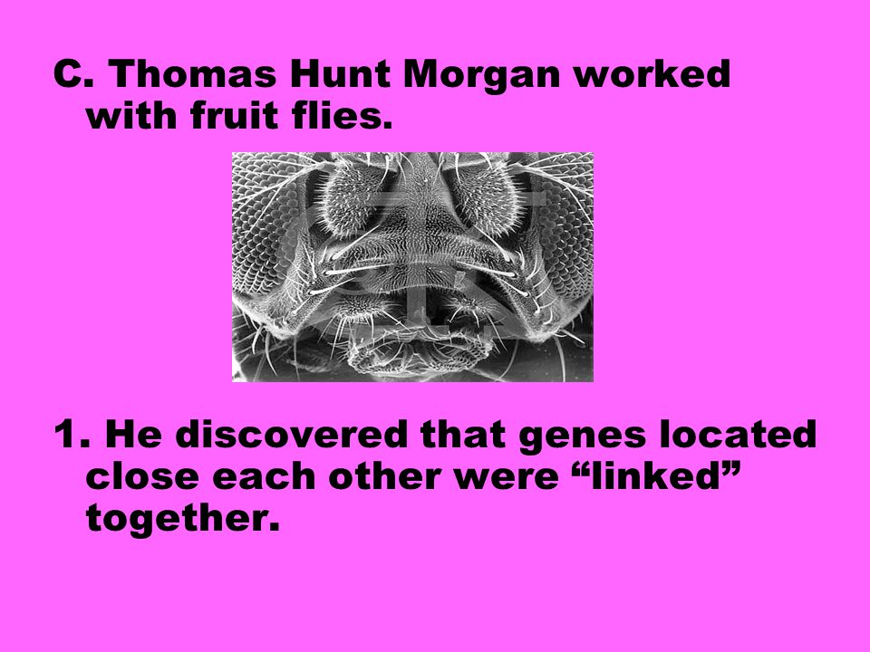 C.Thomas Hunt Morgan worked with fruit flies. 1.