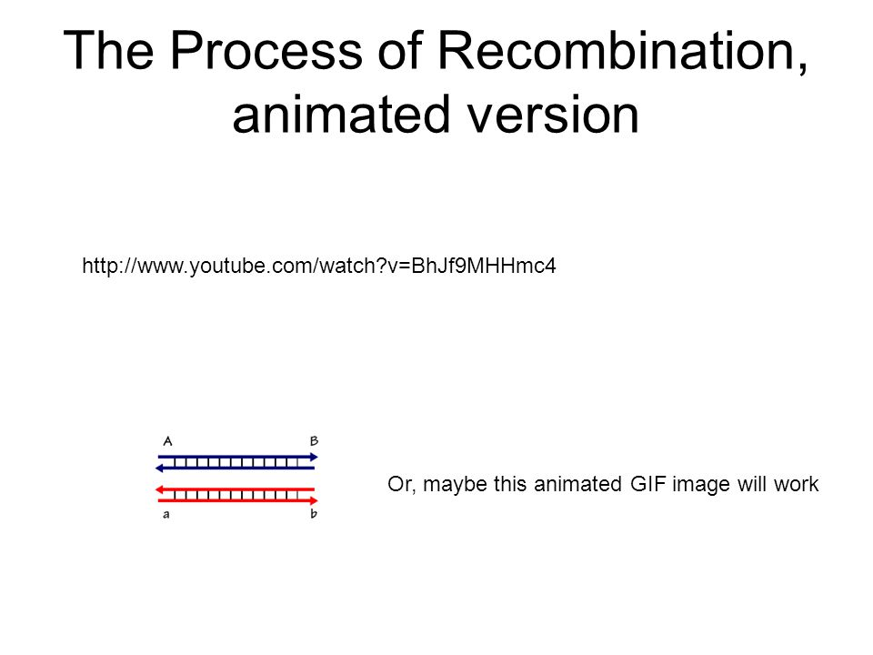 The Process of Recombination, animated version http://www.youtube.com/watch v=BhJf9MHHmc4 Or, maybe this animated GIF image will work