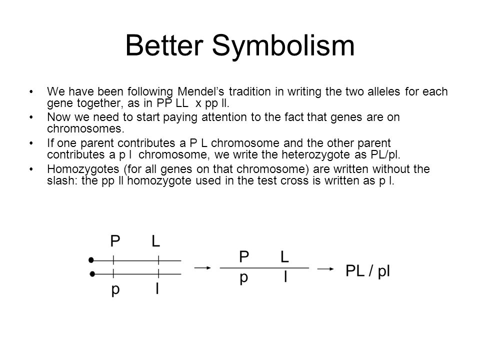 Better Symbolism We have been following Mendel's tradition in writing the two alleles for each gene together, as in PP LL x pp ll.