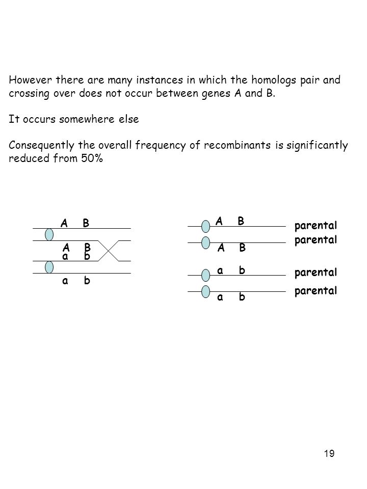19 However there are many instances in which the homologs pair and crossing over does not occur between genes A and B.