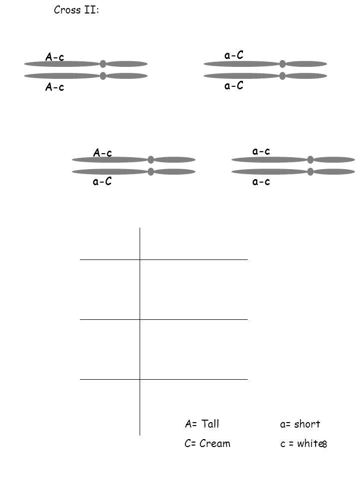 8 Cross II: A= Talla= short C= Cream c = white A-c a-C A-c a-C a-c