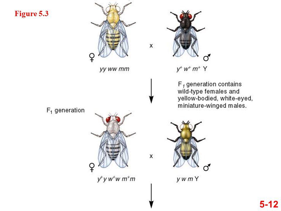 5-12 Figure 5.3