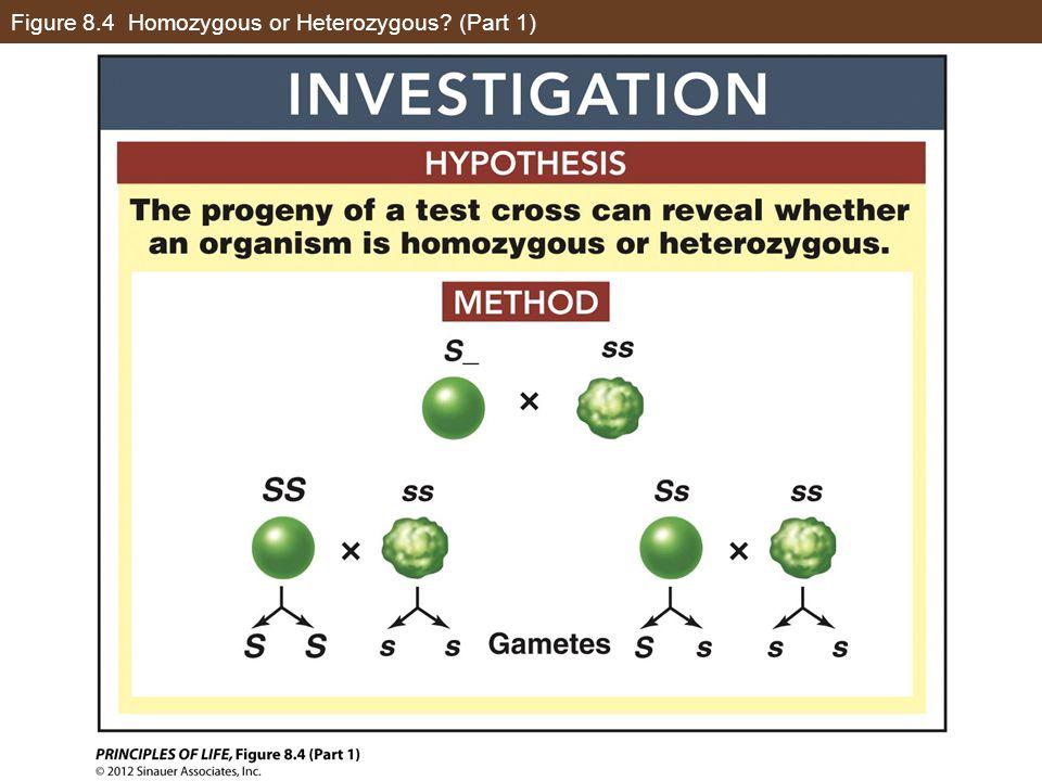 Figure 8.4 Homozygous or Heterozygous (Part 1)