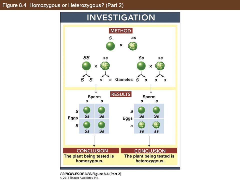 Figure 8.4 Homozygous or Heterozygous (Part 2)