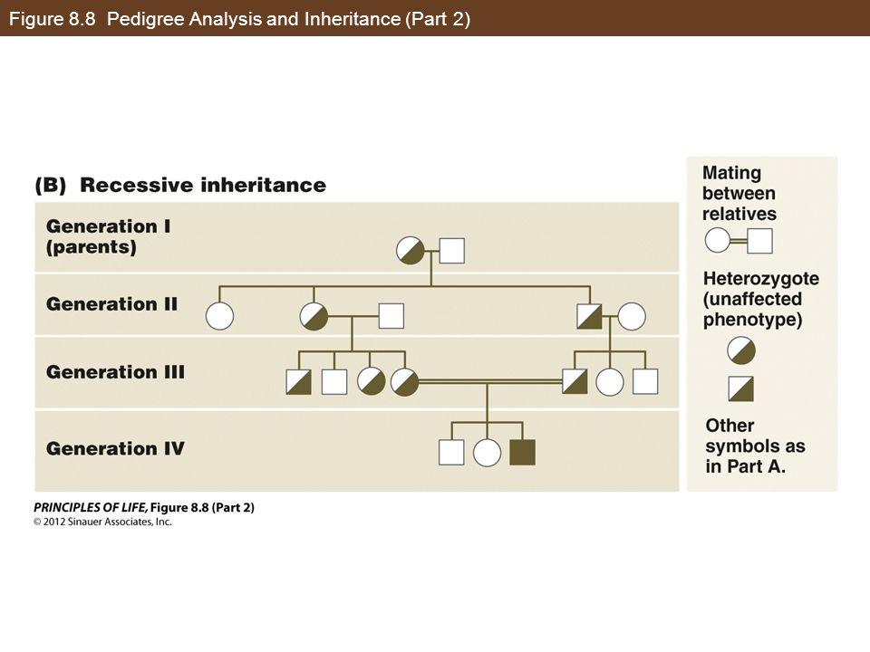 Figure 8.8 Pedigree Analysis and Inheritance (Part 2)