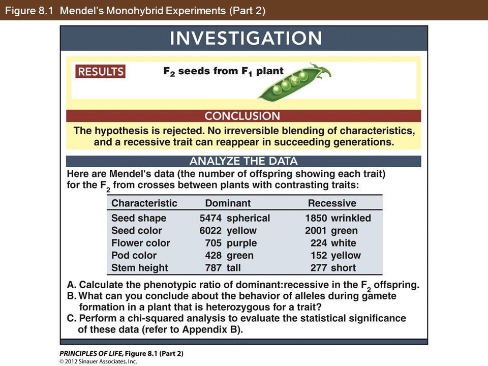 Figure 8.13 Some Alleles Do Not Assort Independently (Part 1)