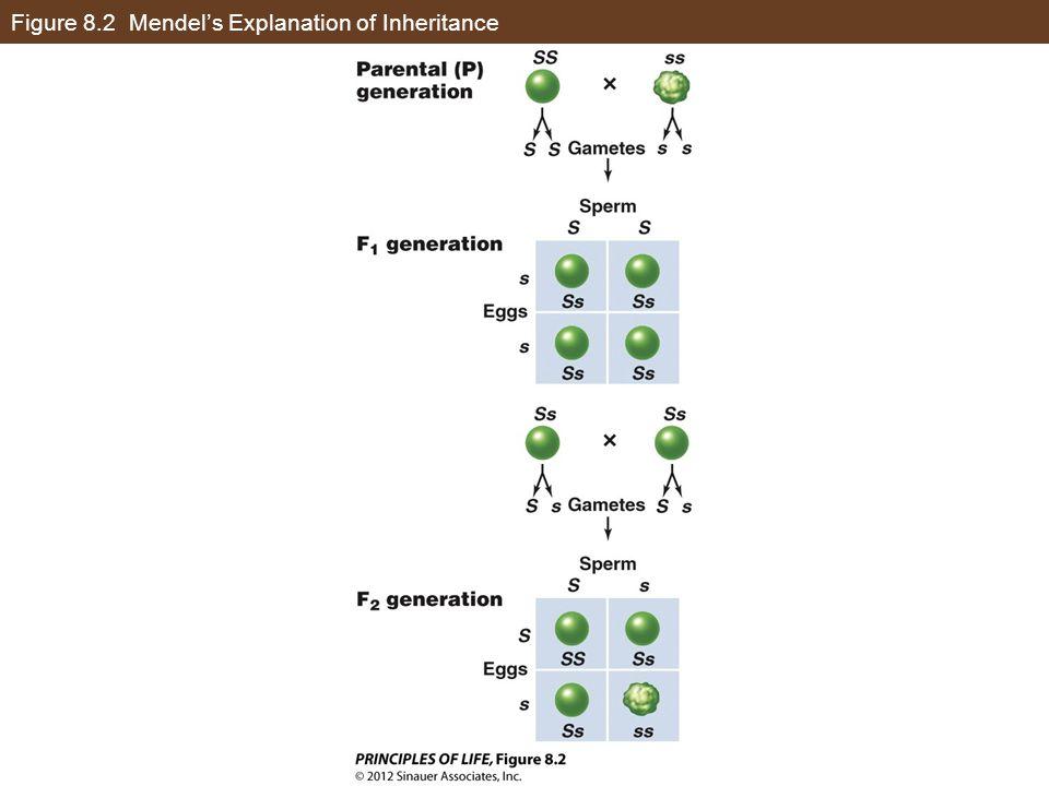 Figure 8.8 Pedigree Analysis and Inheritance