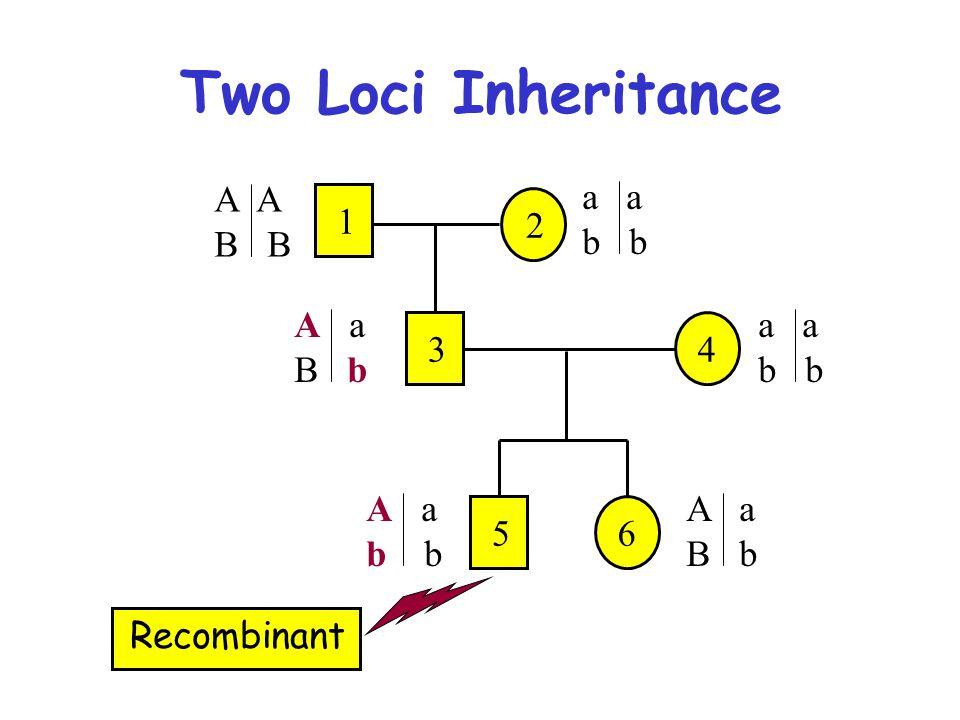 Two Loci Inheritance Recombinant 2 1 A B a b A a B b 34 a b A a b 56 A a B b