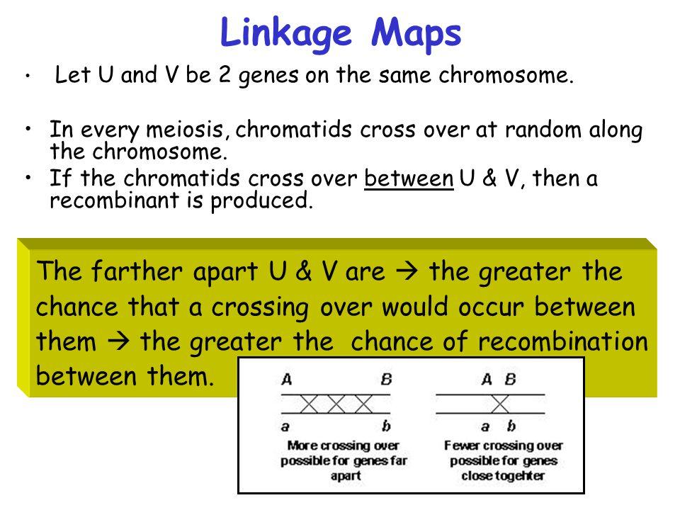 Linkage Maps Let U and V be 2 genes on the same chromosome.